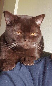 Screenshot_20201228-183955_Photos